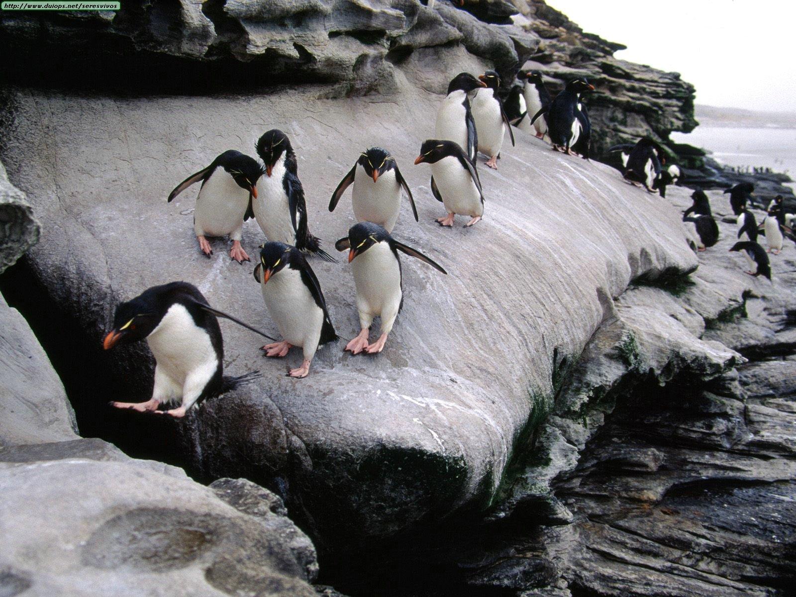 Fotos e imagenes de las islas Malvinas (argentinas)  Parte 2