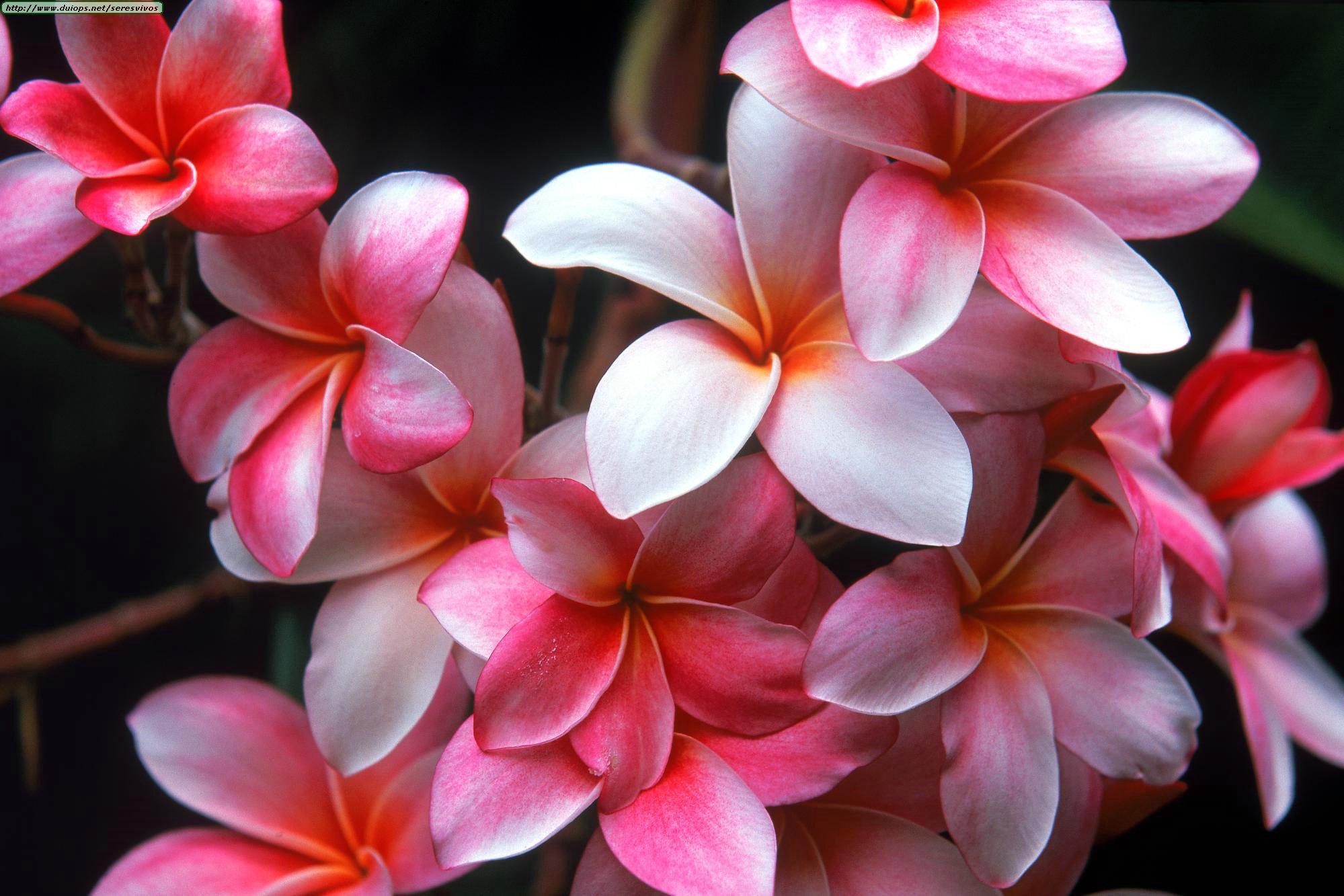 Букеты цветов скачать бесплатно на телефон