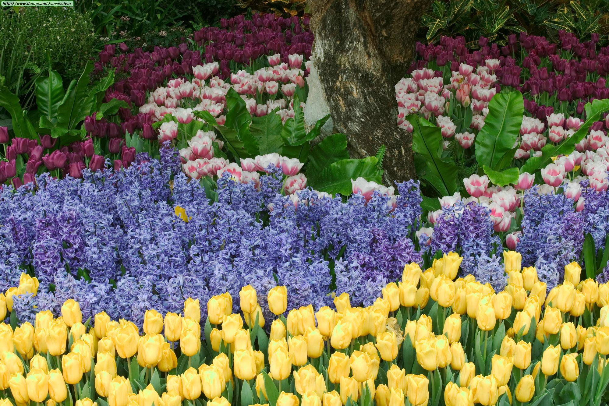 Un bello rincón para el jardín