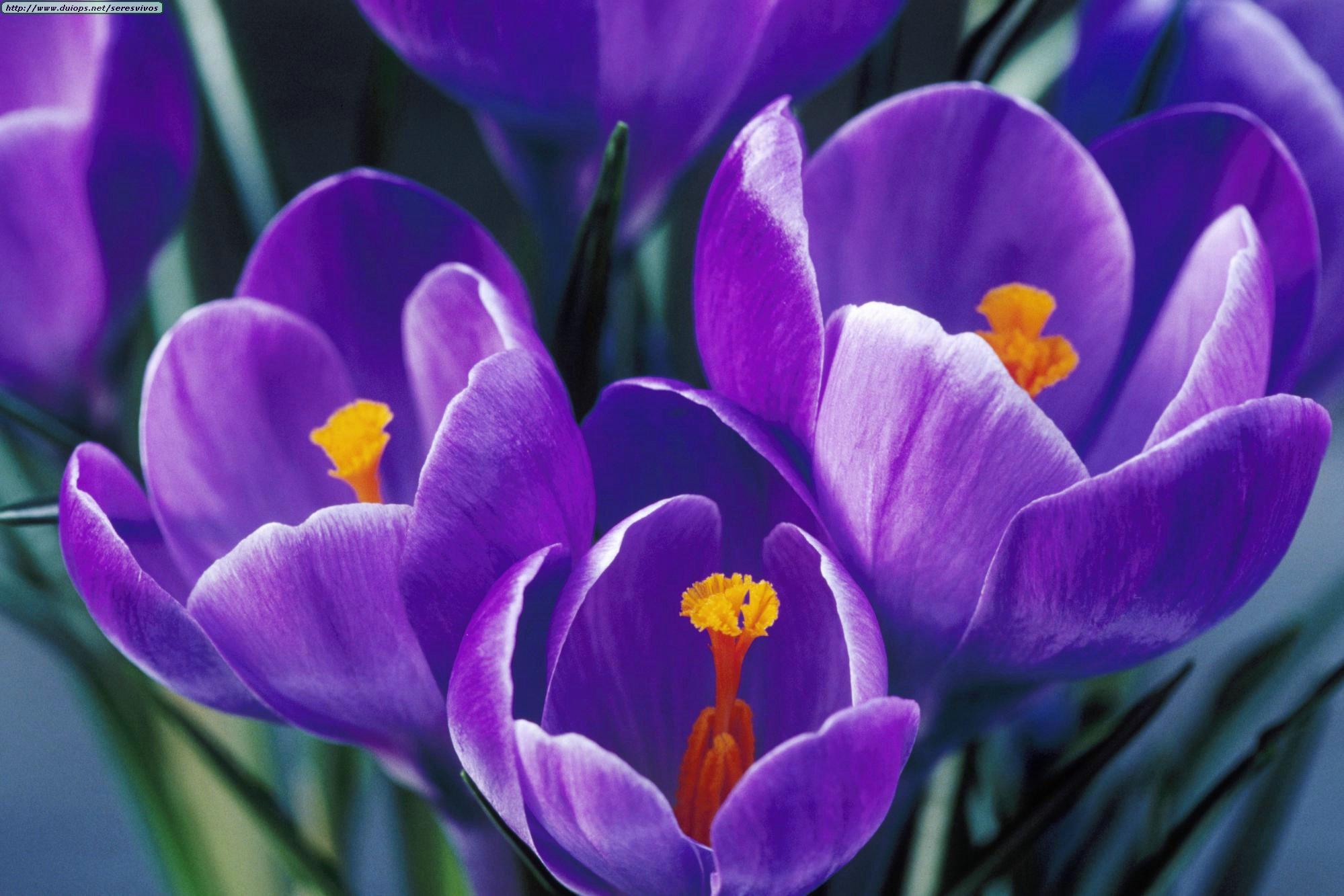 Цветы обои для рабочего стола картинки цветов на