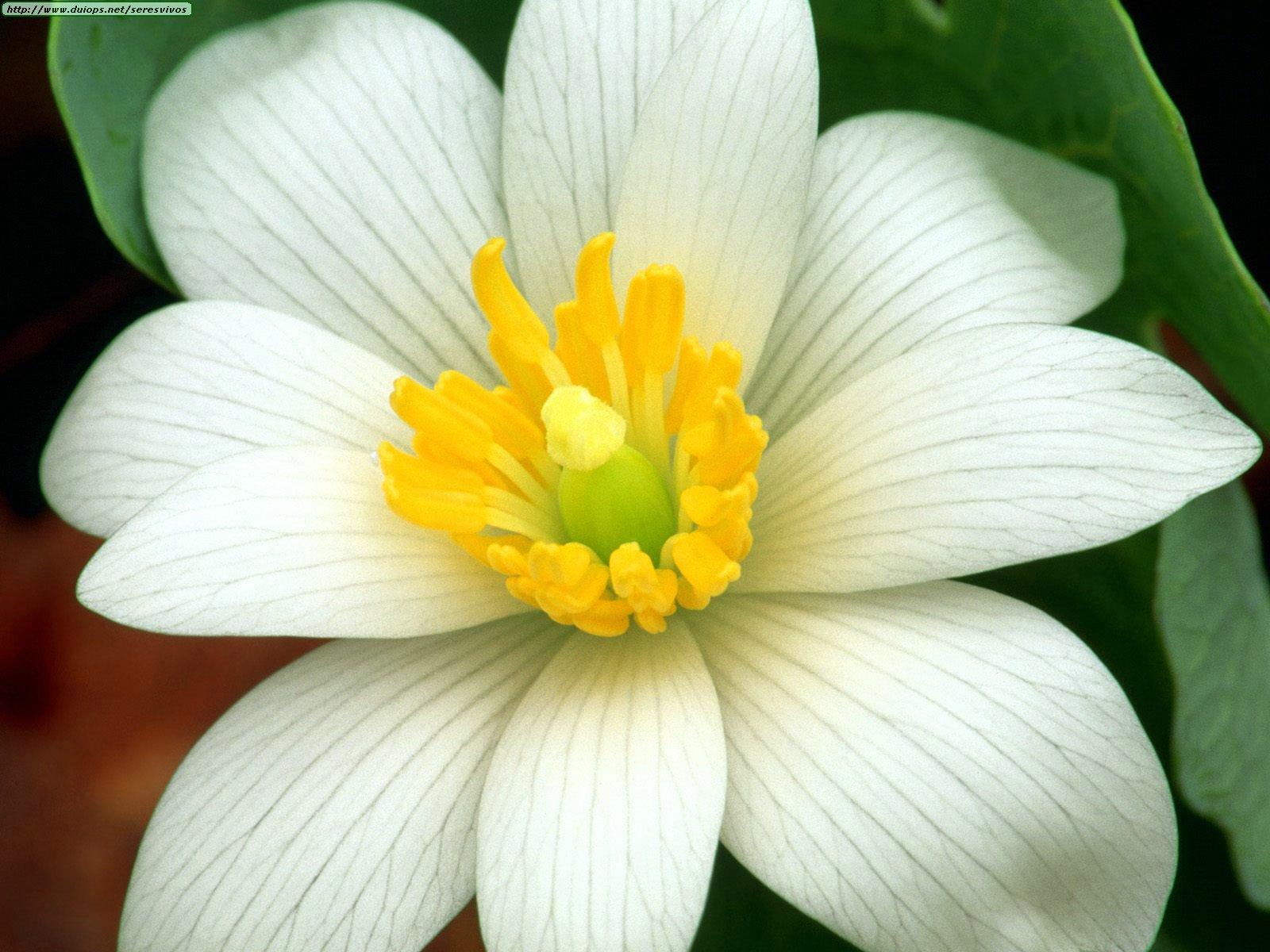 Цветок на л фото