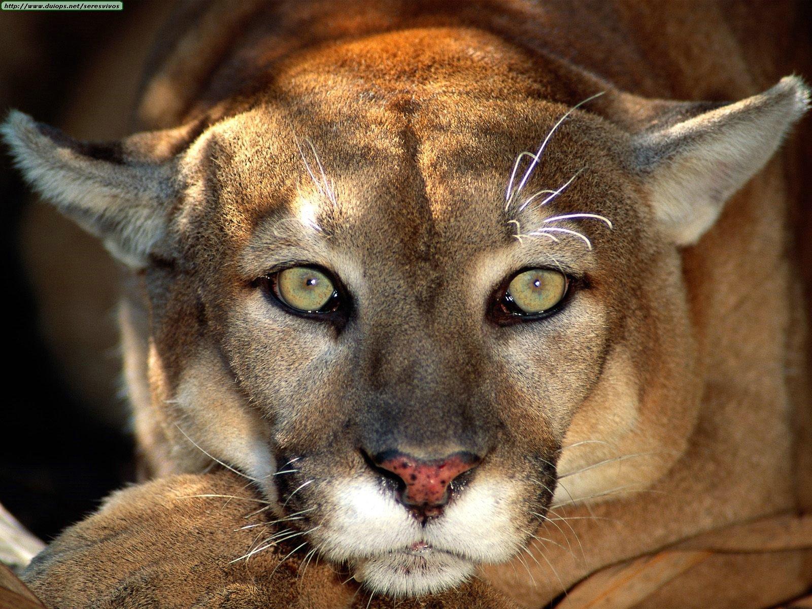 Animals%20Big%20Cats_Body%20Language.jpg