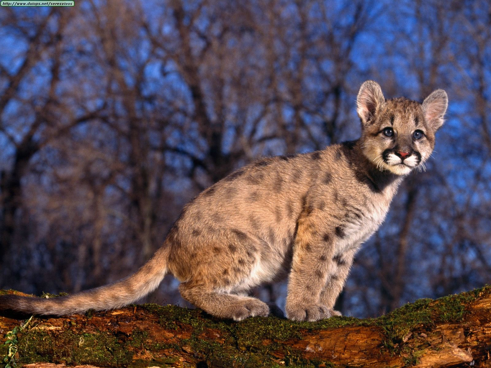 small wild animals wallpapers - photo #43