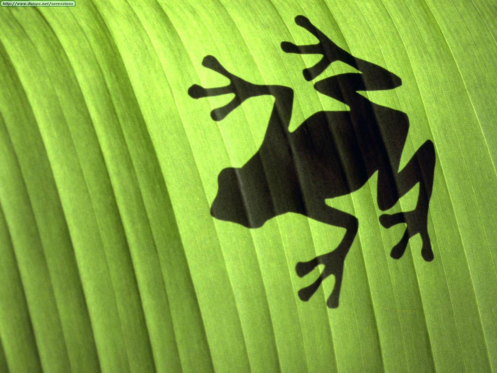 画像 壁紙 蛙 カエル のイラスト画像大量 素材 Naver まとめ