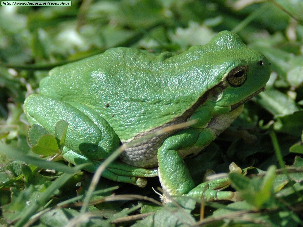 Imagenes De Ranas Top Fotos De Ranas Y Wallpapers