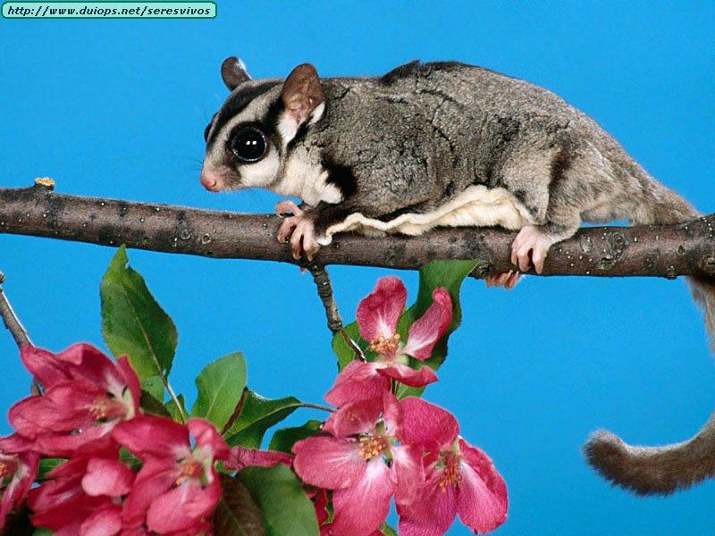 fotos de roedores