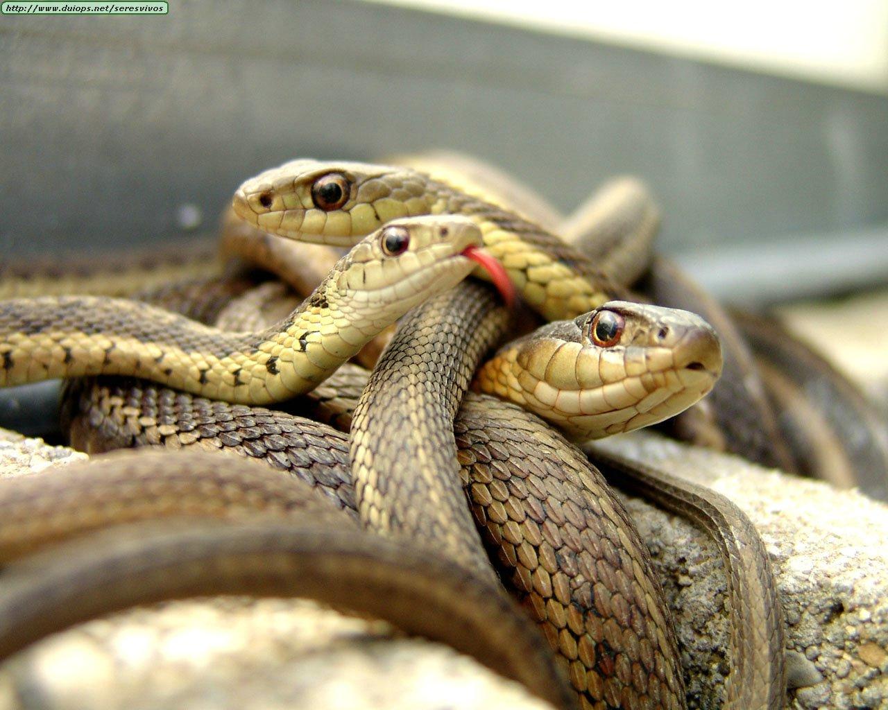imagenes serpientes
