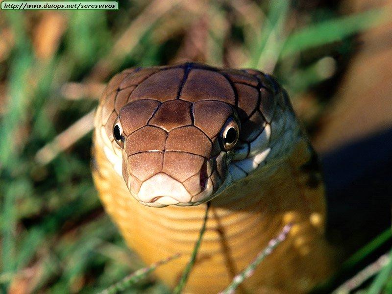 Serpientes, Imagenes