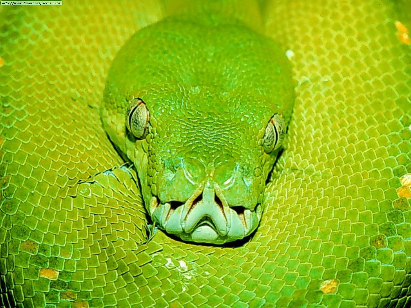 Tipos de serpientes que hay en el mundo