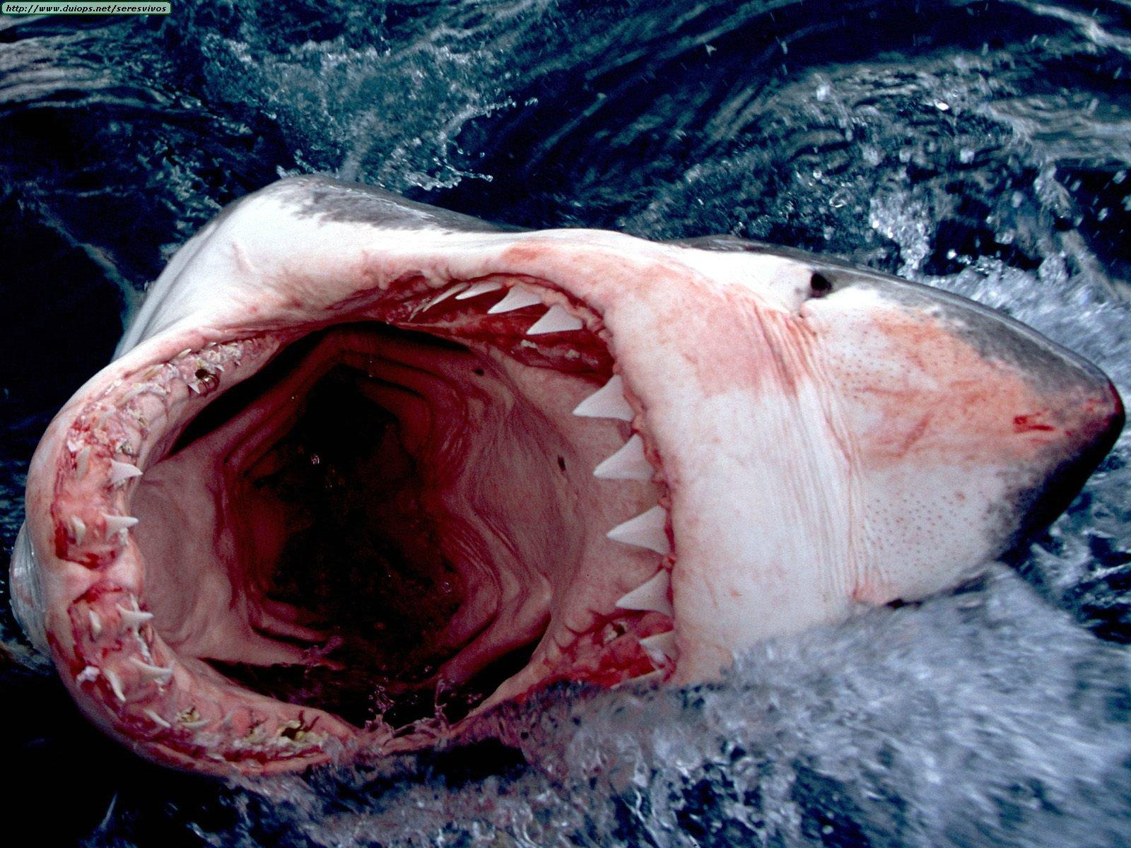 Нападения акул Во всем мире каждый год