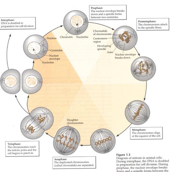 Celula_actividad_mit on Plant Life Cycle Flip Book